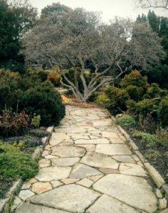 National Cathedral Bishops Garden / Beverly Hurley