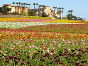 Flower Fields Hotel