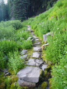 Castle Crest Wildflower Trail