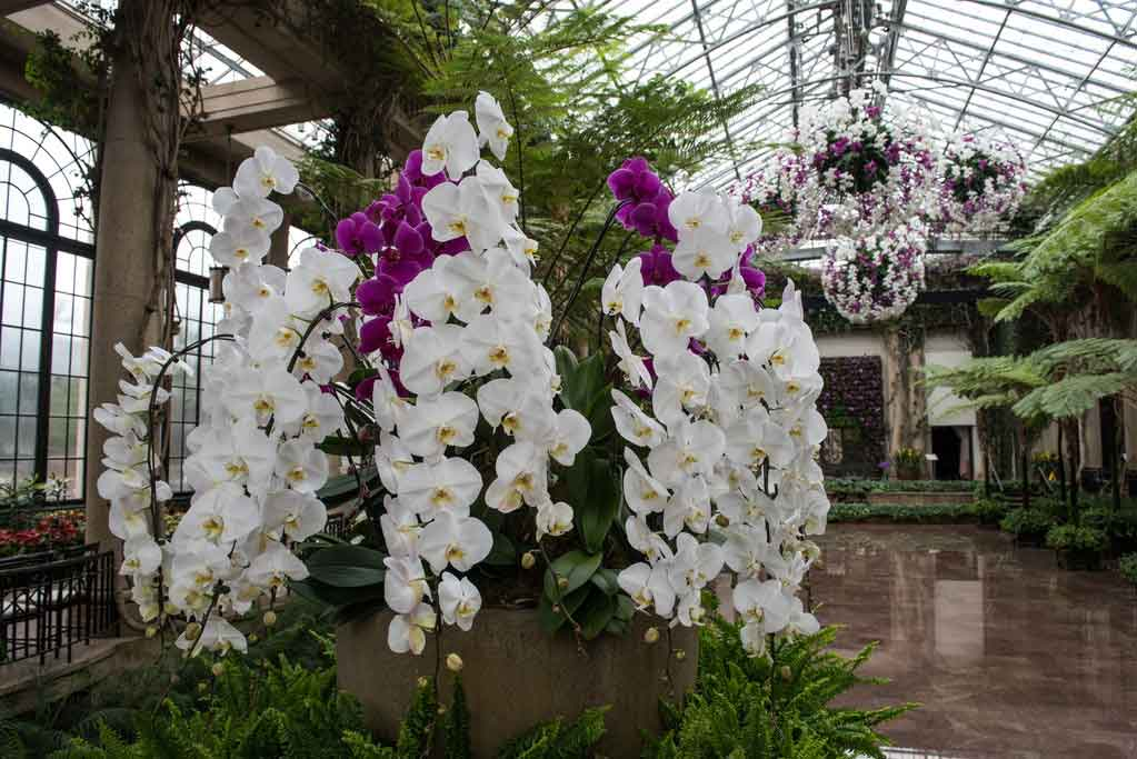 Longwood Gardens Orchids