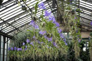 Longwood Gardens Orchids
