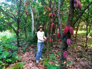 Angela Villa / Garden Island Chocolate