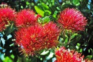 Botanic Garden of Wellington