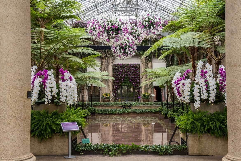 Longwood Gardens Orchid Extravaganza Garden Destinations