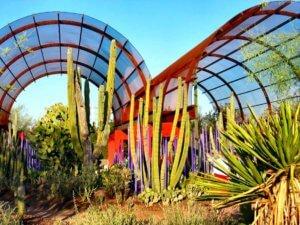 Desert Botanical Garden Arizona