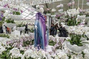 Keukenhof orchid show