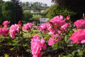 Meuse-Argonne Cemetery