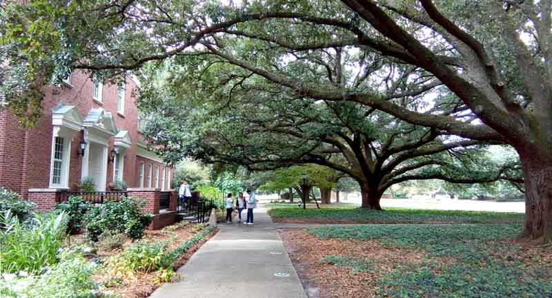 Live oaks at UNC-Wilmington