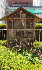 Fairmont Waterfront Vancouver bee hotel