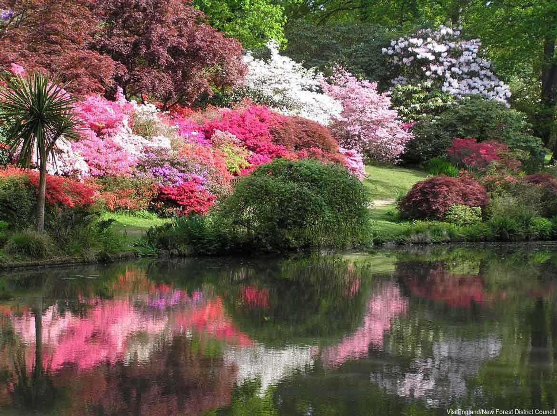 Azaleas in bloom at Exbury Gardens
