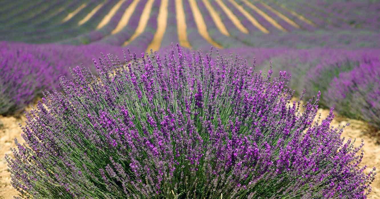 Fantastic Flower Festivals | Garden Destinations Magazine