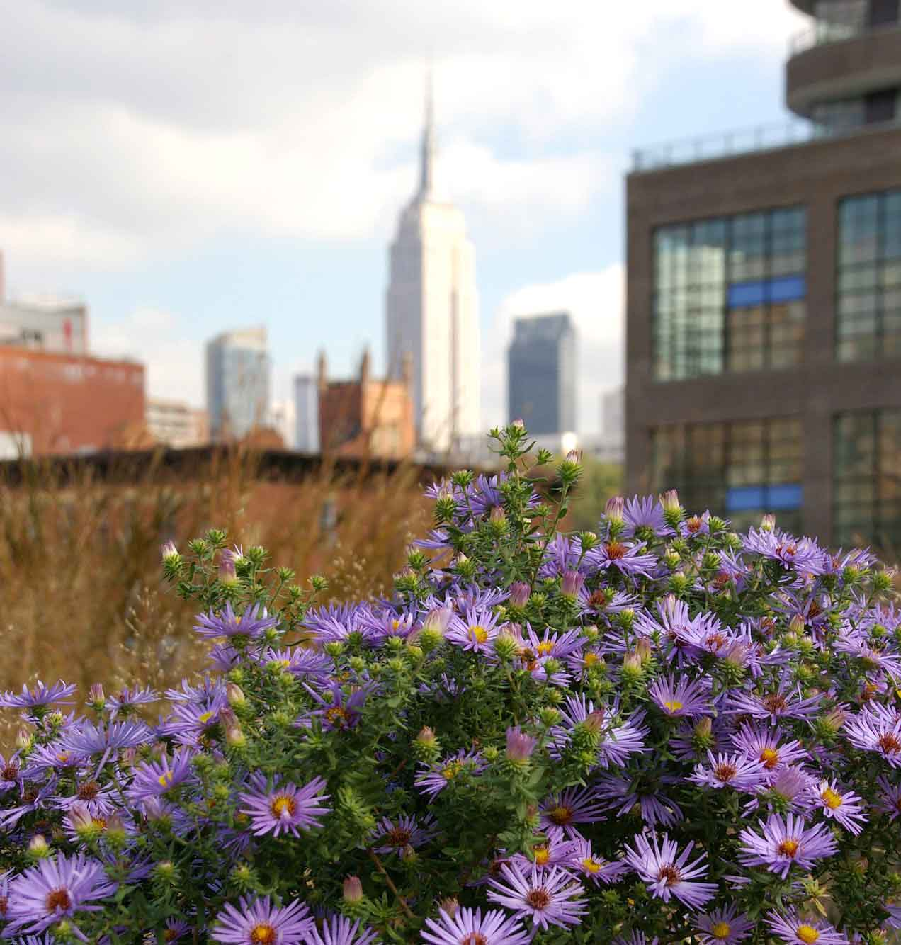 5 Rooftop Parks And Gardens To Visit In New York Garden