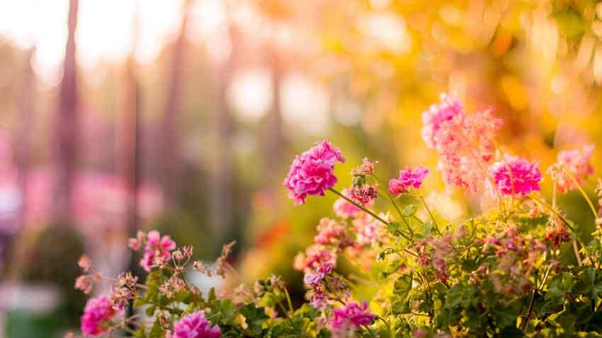 Smoky Mountain flowers