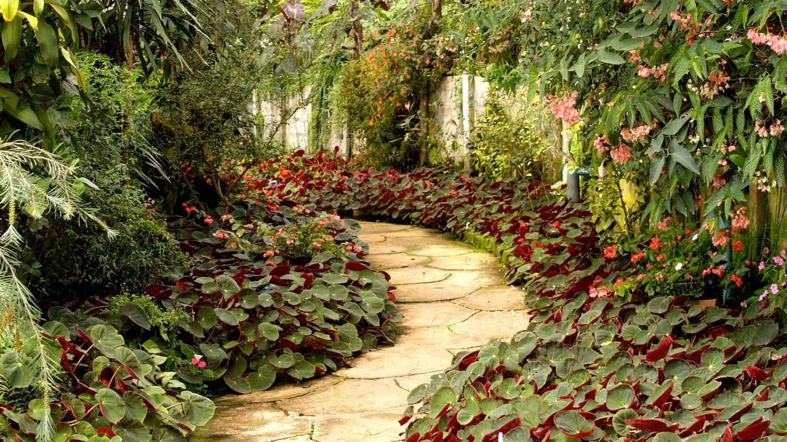 Smoky Mountain gardens