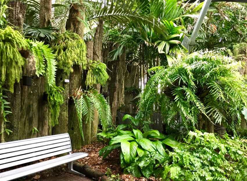 Mackay Botanic Garden