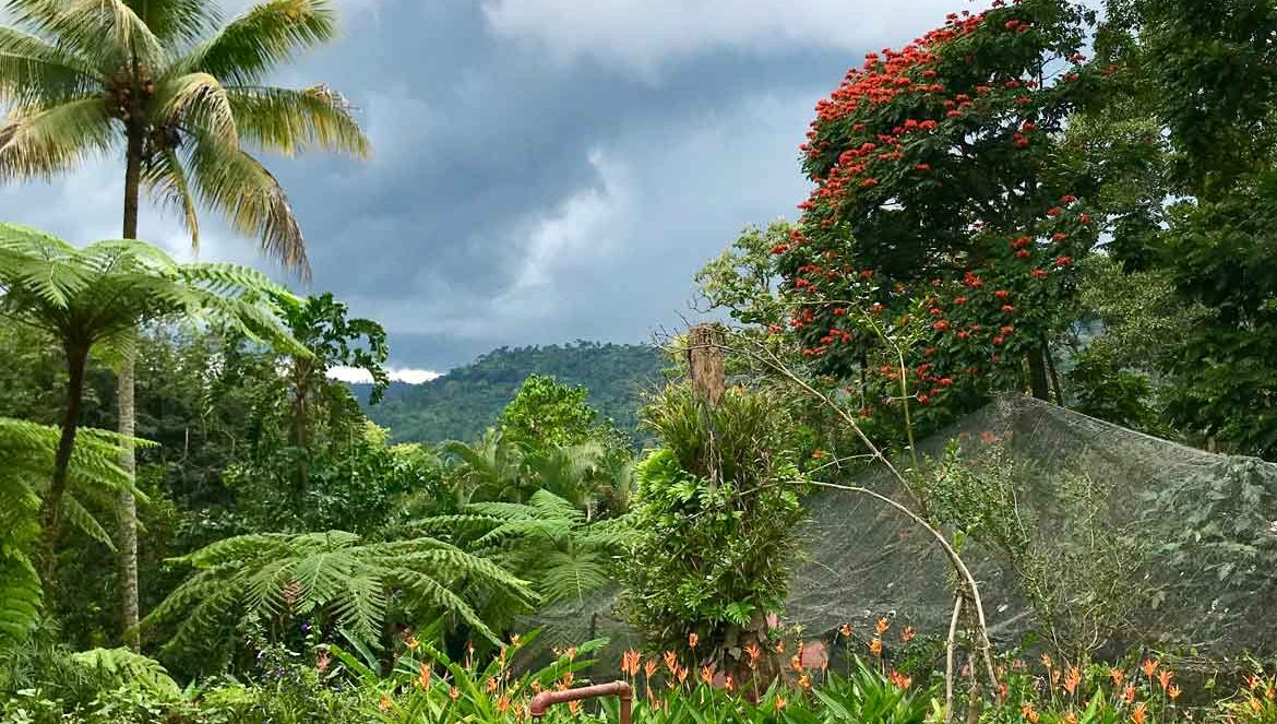 Jungle Gardens at Finca Argovia