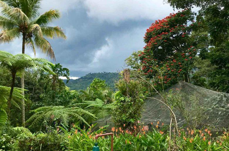 Jungle Gardens at Finca Argovia