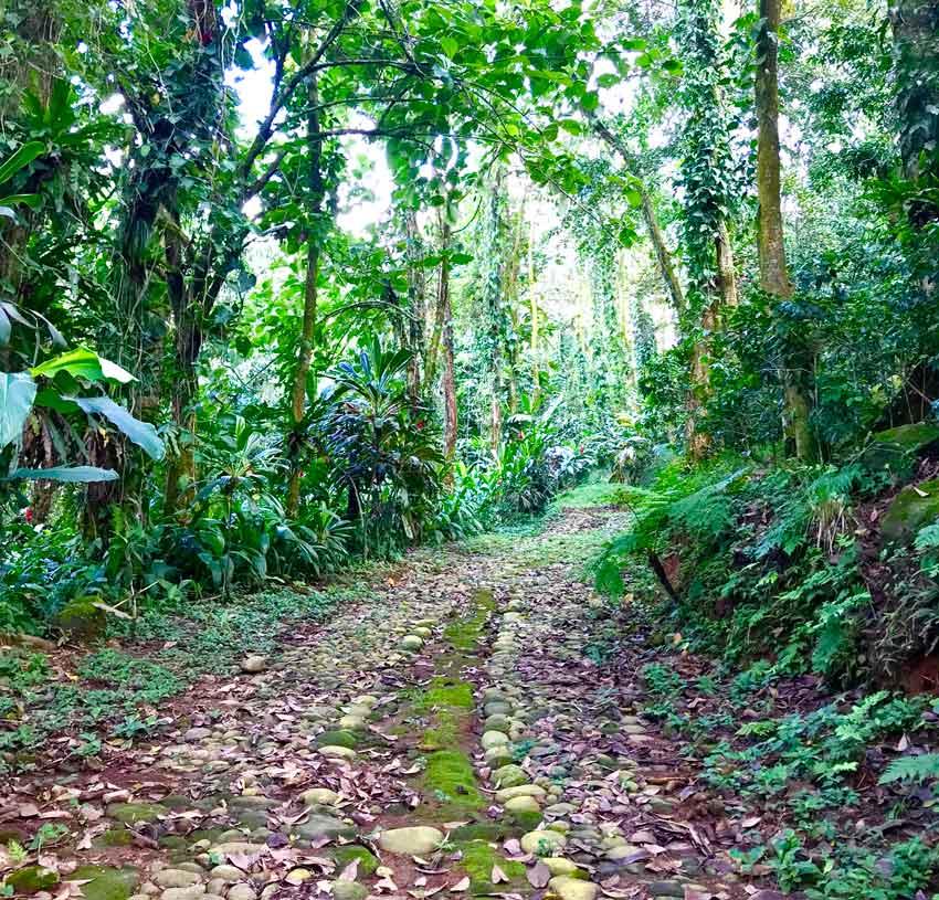 Jungle garden in Finca Argovia
