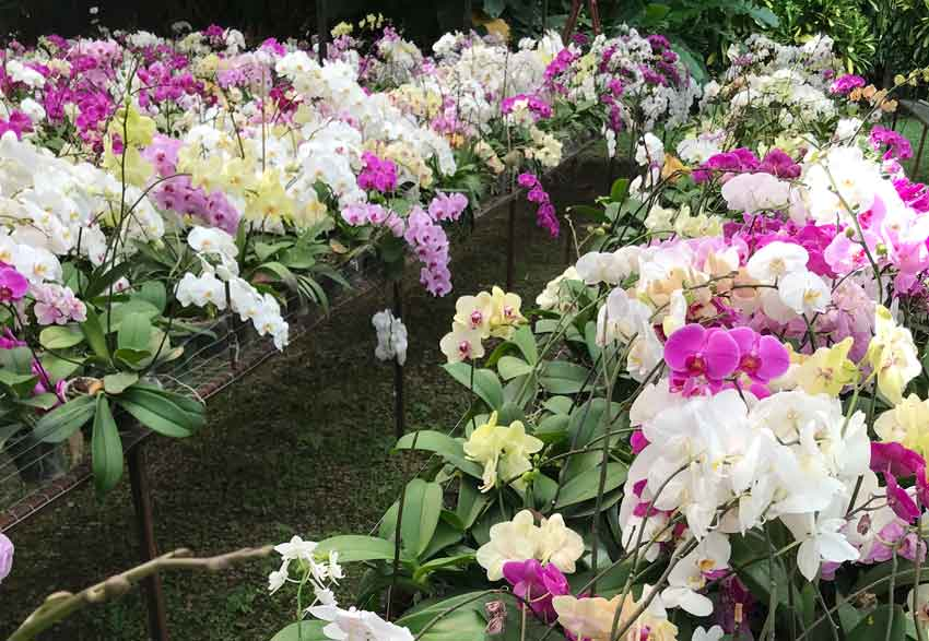 Orchids at Finca Argovia