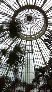 Palm dome in Buffalo