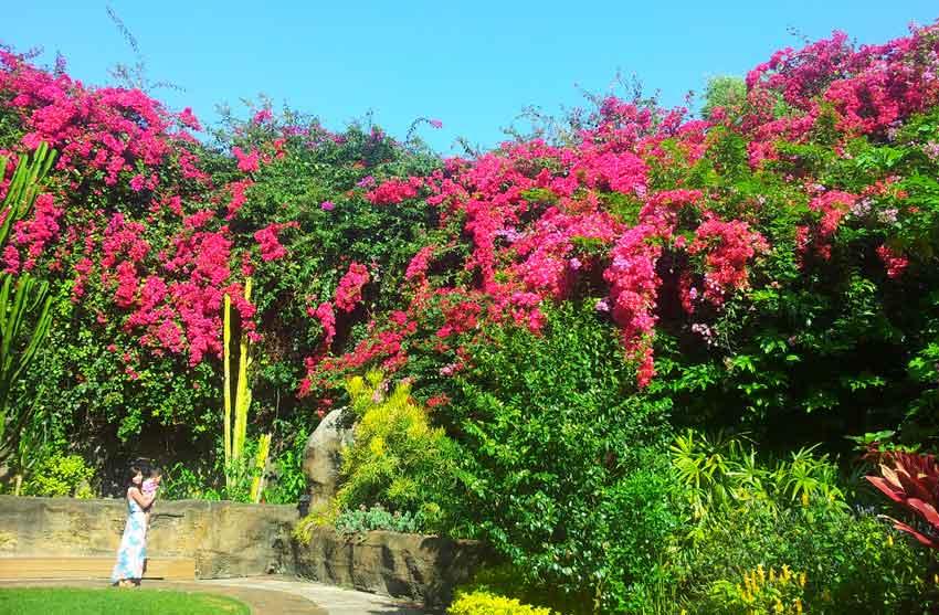 Sunken Gardens Florida