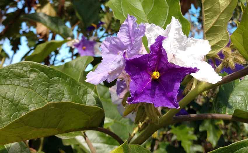 USF Botanical Gardens Florida