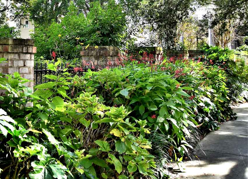 Tiedemann Park Charleston