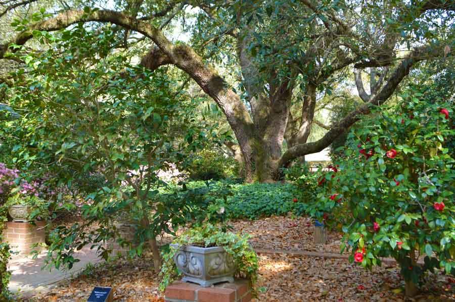 Aiken arboretum trail